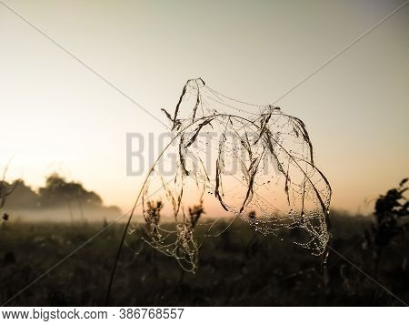 Closeup View Of Small Dew Drops On Cobweb Threads Located On Meadow Plants Early In The Morning. Mor