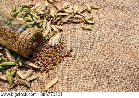 Grass Pea Seeds Or Cicerchia Pods In Glass Jar Isolated On Burlap Background, Also Known As Lathyrus