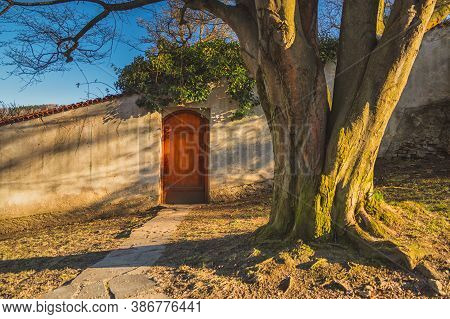 Still Life In The Park - Wooden Door In The Wall, Stone Walkway, In The Foreground Trunk Of An Old T