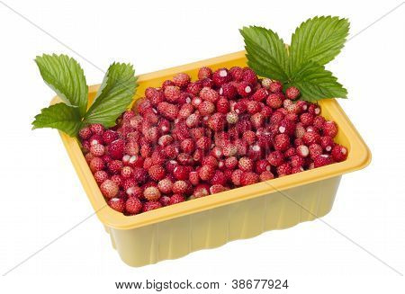 Forest  Strawberries In Container