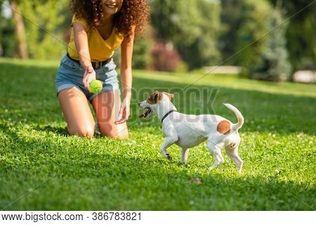Partial View Of Young Woman Throwing Ball To Jack Russell Terrier Dog