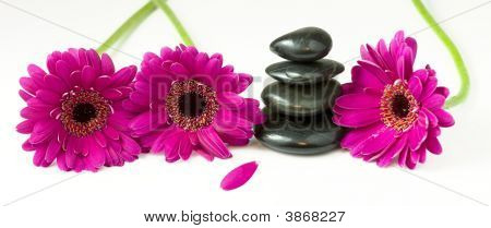 Balancing Pebbles And Daisy Flowers