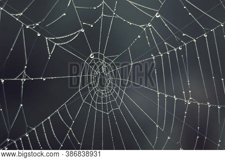 Cobweb - Drops Of Morning Dew On A Spider Web In Fog, Blurred Background