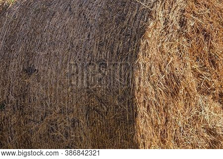 Dried Rolled Up Haystack Background. Dry Yellow Golden Colors Straw Texture. Forage Straw Rollers Fo