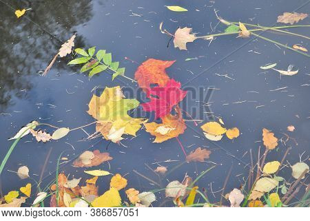 Beautiful Colorful Autumnal Leaves On The Water