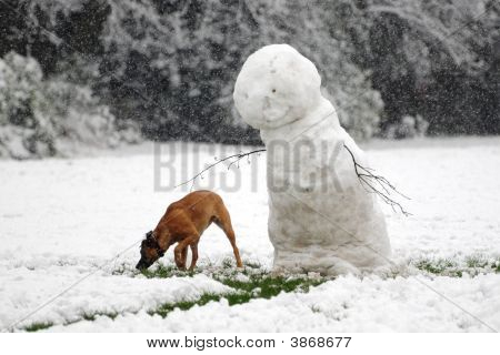 One Snowman And His Dog