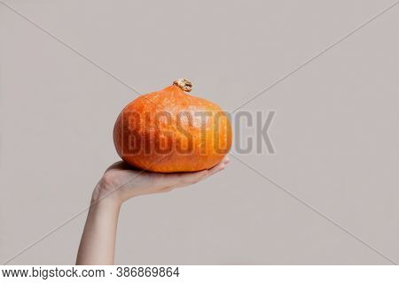 Female Hand Holding Orange Pumpkin In Front Of Gray Background With Copy Space. Autumn Harvest Compo