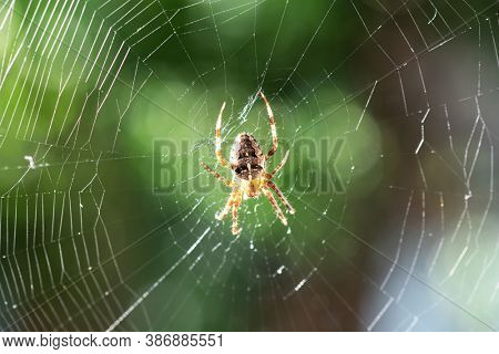 Spider on spider web on blurred green trees background. Macro shot. Insect photography