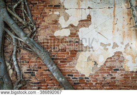 Root Trees Overgrown Cracked Vintage Red Brick Wall Background