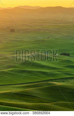 Beautiful Landscape Of Crop Field In Palouse In The Morning, Washington, Usa