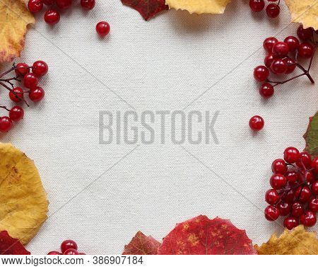 Background With Autumn Aspen Leaves And Viburnum Berries, Top View. Space For Your Text.
