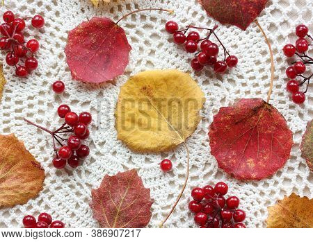 Background With Autumn Aspen Leaves And Viburnum Berries On A Light Lace Tablecloth, Top View.