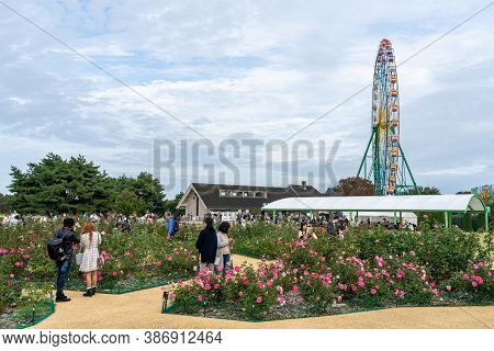 Ibaraki Prefecture, Japan - Oct 20, 2019 : Tourists Taking Pictures In Rose Garden Inside The Hitach