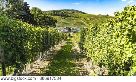 Vineyard In Front Of A Village Near Moselle In Traben Trabach In Germany