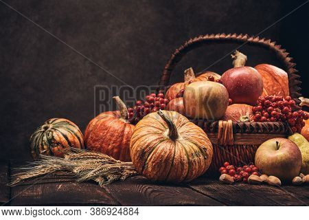Festive autumn still life with pumpkins, basket with apples, berries, nuts, pears, rye ears on wooden surface on brown background with copy space. Concept of autumn harvest, happy Thanksgiving  day