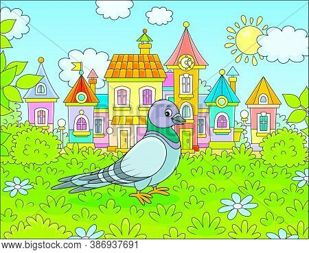 Grey Pigeon Walking On Green Grass Of A Summer Town Park On A Sunny Warm Day, Vector Cartoon Illustr
