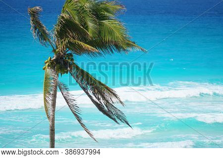 Coconut Tree In Front Of Colorful Blue Caribbean Sea