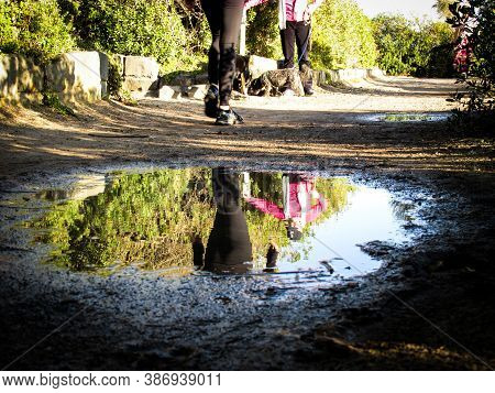 Sandringham, Au - 7 Sept 2018: Water Puddle On Nature Trail Formed After Rain. Sandringham Is An Aff