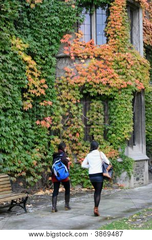 Fall Ivy On University Campus
