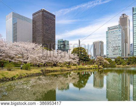 5 April 2019: Tokyo, Japan - Lake And Cherry Blossom In Kyu-shiba-rikyu Gardens, A Traditional Style