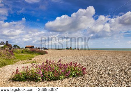 16 June 2019: Aldeburgh, Suffolk, Uk - The Beach, Covered In Shingle, And Wildflowers, On A Beautifu