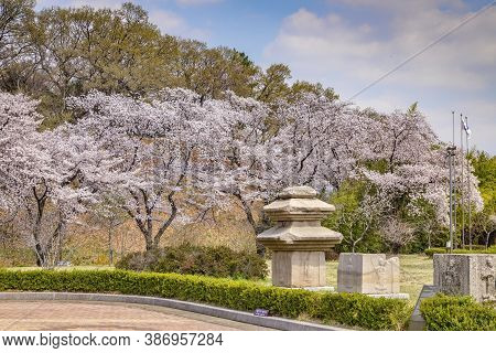 31 March 2019: Gyeongju, South Korea - Cherry Blossom And Carved Blocks Of Stone In The Grounds Of G
