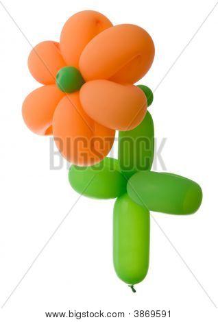 Ballon Flower