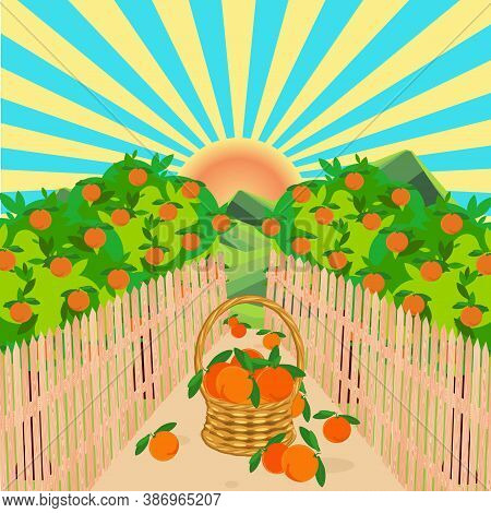 Orange Garden Green Landscape Wood Fence Path Sun Basked With Fruit Blue Sky Flat Design Art Design