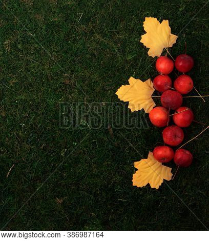 Red Apples And Yellow Autumn Leaves On Green Grass Background Flat Lay. Autumn Gardening Concept. Im