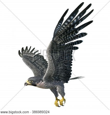 Peregrine Falcon 3d Illustration Isolated On White Background