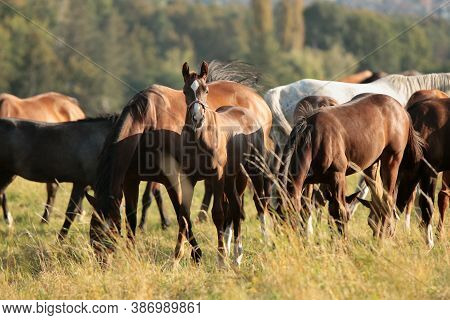 Horses stallion mare pet colt Nature foal pet Nature sunrise sunset pet animal Nature background pet Nature landscape Nature background pet horse Nature pet Nature background animal Nature background animal Nature landscape Nature pet Nature background.