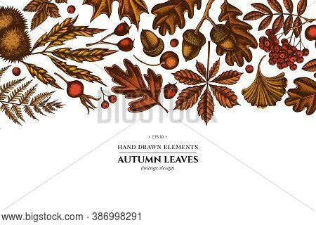 Colored Elements Design With Fern, Dog Rose, Rowan, Ginkgo, Maple, Oak, Horse Chestnut, Chestnut Haw
