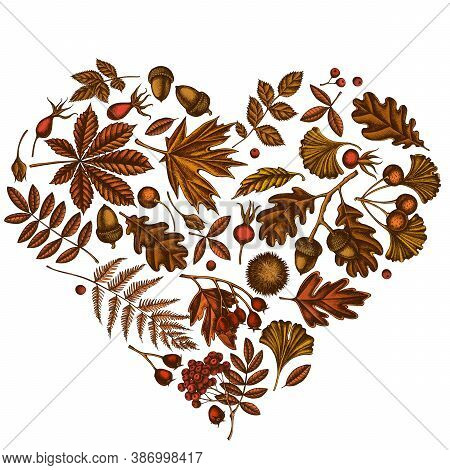 Heart Design With Colored Fern, Dog Rose, Rowan, Ginkgo, Maple, Oak, Horse Chestnut, Chestnut Hawtho