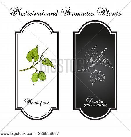 Monk Fruit Or Luo Han Guo Siraitia Grosvenorii , Medicinal Plant. Hand Drawn Botanical Vector Illust