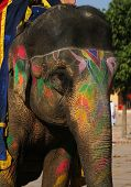 a pretty indian elephant with colorful decoration painting poster