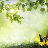 butterfly on a dandelion. spring background poster
