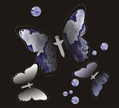 Picture with the image of beautiful moths. poster