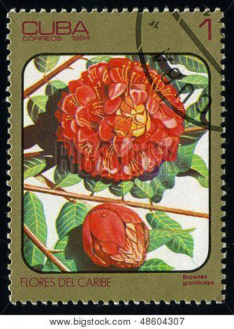 Cuba - Circa 1984: Post Stamp Printed In Cuba Shows Image Of Brownea Grandiceps (rose Of Venezuela O