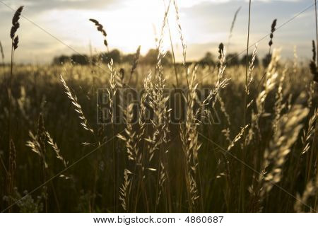 Meadow Land.