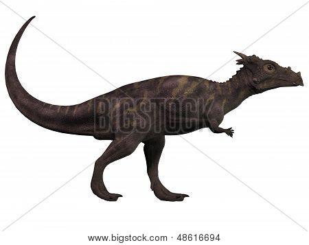 Dracorex On White