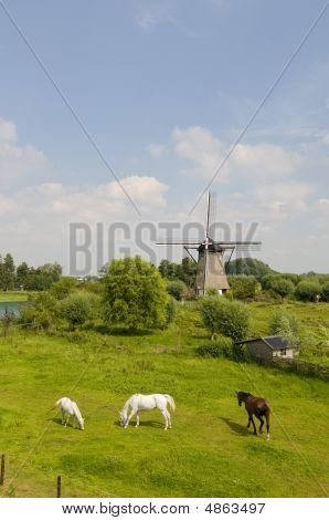 windmill the Hoop and horses in zuilichem Holland poster