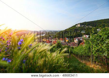 Wineyards of Wurzburg town. Germany