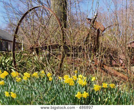 Daffodil Wheel