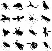 sixteen insects rodents and pests as a silhouette poster