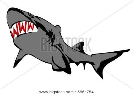 Shark On A White Background