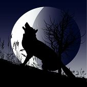 Background illustration with a wolf howling at the moon poster