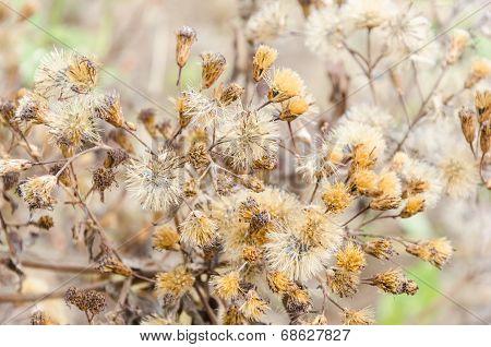 Brown Dry Bloom Grass