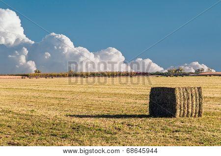 Bale Of Alfalfa Straw