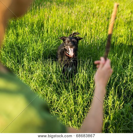 Walking the dog - throwing the stick to fetch to this eager companion