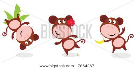Safari animals: Brown cute monkey poses isolated on white background